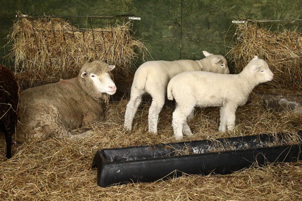 Love Gorgie Farm