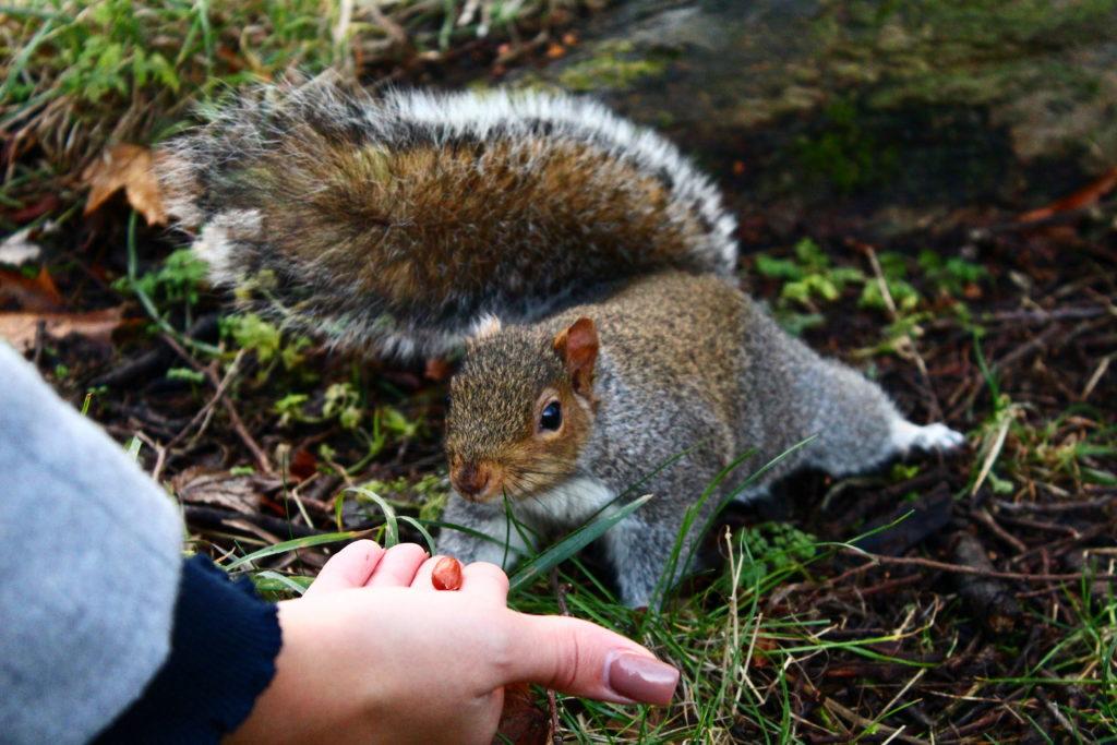 Squirrel in Edinburgh