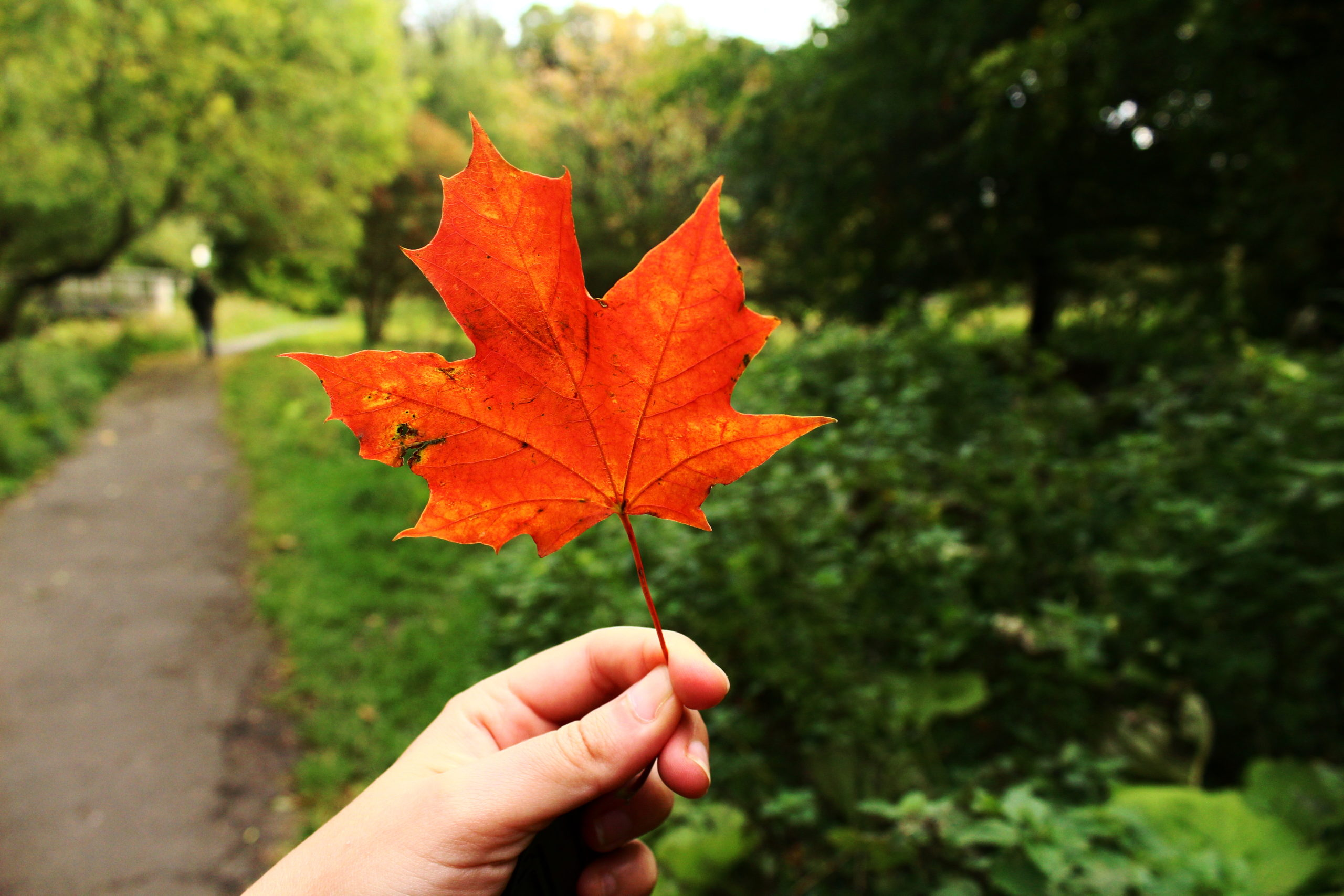 Water of Leith | Things to do in Edinburgh in autumn