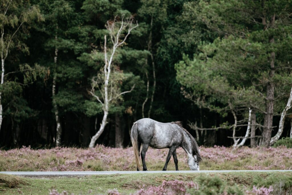 New Forest National Park | UK Staycation Ideas