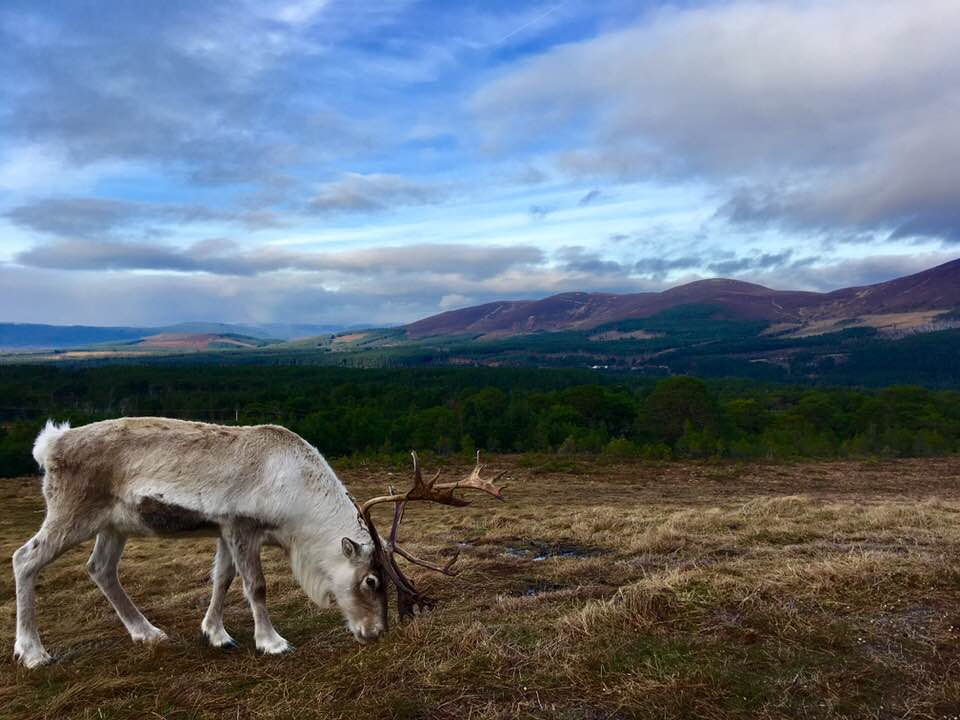 Cairngorm Mountains | Scotland Staycations